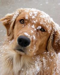 Chilly Dog