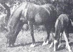BAZRAH (age 27) & her 20th foal, GRAN TWENTI