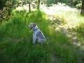 Jack enjoys picnic area at Plimouth Plantation