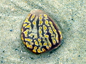 Patterned pebble