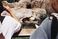 1995 Bronx Zoo 17