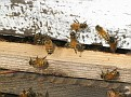 Honey bees enter at the bottom of the hive.