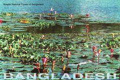 Bangladesh - SHAPLA NFW