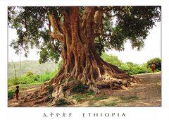 Ethiopia - SHOLA NTR