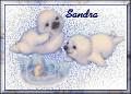 Baby Seals1Sandra