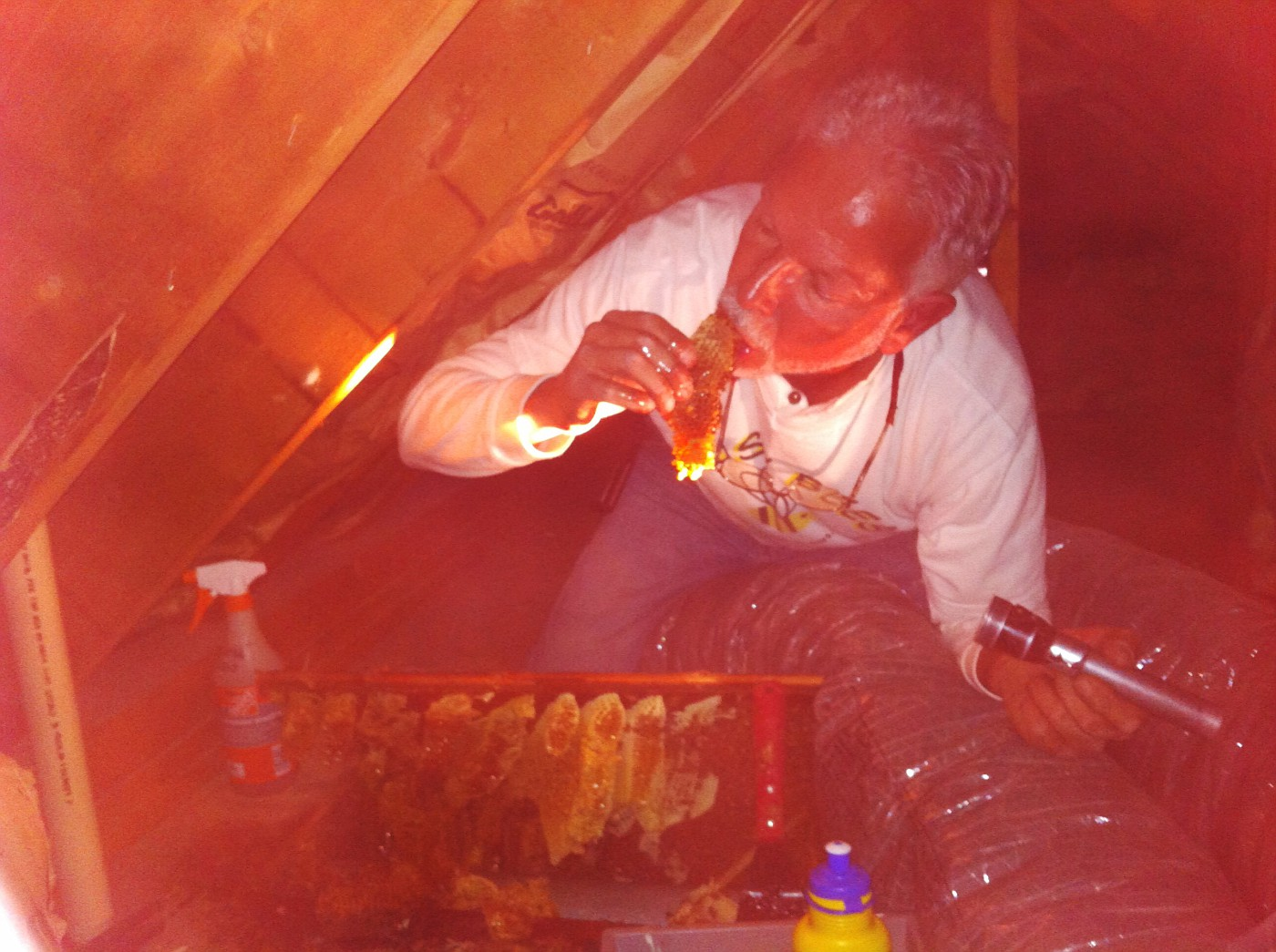 Honey Bee Extraction in very tight quarters in an attic knee wall in Cape May, NJ.  Yes, I am sampling the Honey with bees on the comb.  The Philadelphia Inquirer was there.  Got a story and awesome pix & video.  In Sunday's paper 4-29-2012. Gary