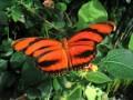 Live Butterfly Show, Carleton University