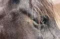 horseeye2.jpg