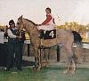 BETTYE SAM #279047 (Samtyr x HCC Maloska, by *Wosk) 1983 grey mare