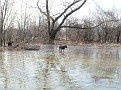 Kona & Gypsy woods and water out in back.JPG