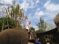 Mae Ping Elephant Camp near Chiang Mai in Northern Thailand Day 12 Feb 23-2006 (113)