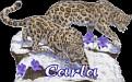 Carla Big Cats2
