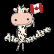 Alexandre - CanadaDayCow