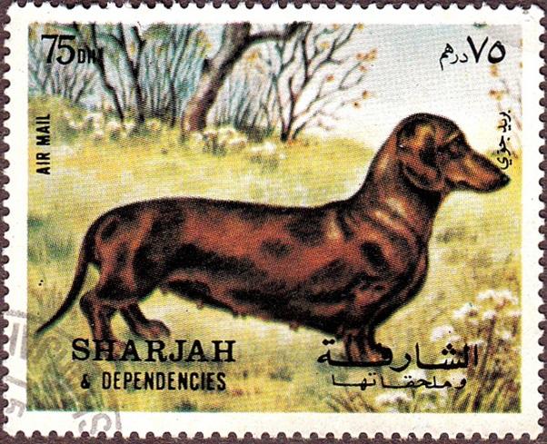 Sharjah Dachschund