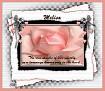 Melisa-gailz-pink rose
