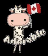 Adorable - CanadaDayCow