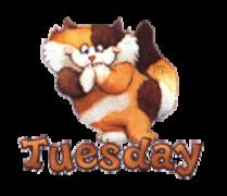 DOTW Tuesday - GigglingKitten