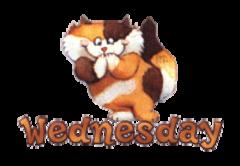DOTW Wednesday - GigglingKitten