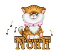 Noah - CuteKittenSitting
