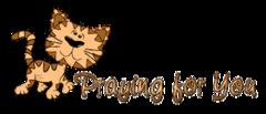 Praying for You - CuteCatWalking