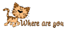 Where are you - CuteCatWalking
