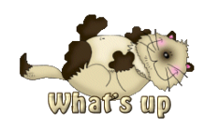 What's up - KittySitUps