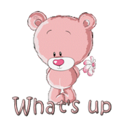 What's up - ShyTeddy