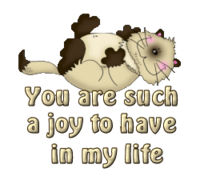 You are such a joy to have in my life - KittySitUps