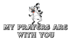 My prayers are with you - RaccoonStepOnName