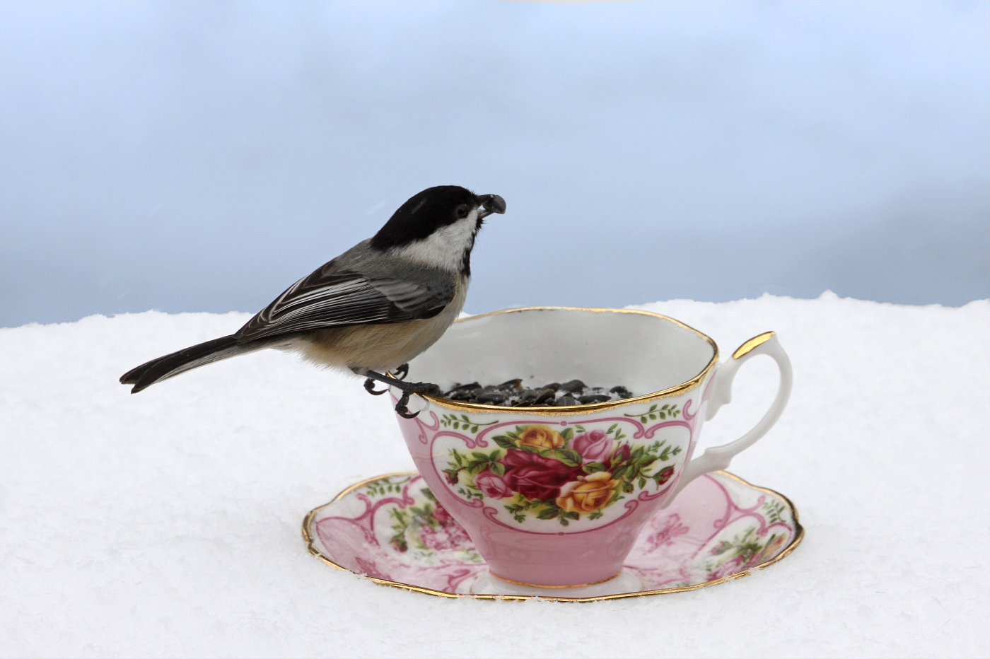 Teacup at the Feeder #4