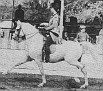 GAZZAL #18898 (Rifage x Roukala, by Kahar) 1961 grey stallion bred by Van Vleet Arabian Stud; sired 40 registered purebreds