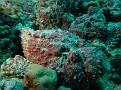 Two Stonefish - can you see them?