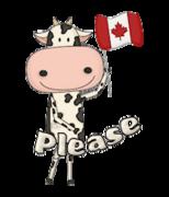 Please - CanadaDayCow