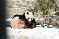 070216 Natl Zoo099