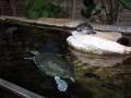 The Toledo Zoo 061