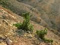 11 Judean Desert (36)