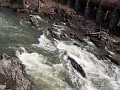 Wappingers Falls at Wappinger Creek, April 21st 2007 018