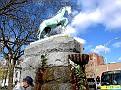 WATERBURY - HORSE