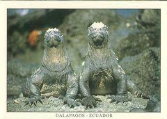 Galapagos - MARINE IGUANA NA