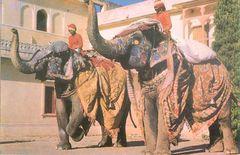 India - INDIAN ELEPHANT NA
