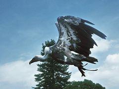 Landung Gänsegeier