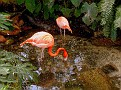 flamingos at the Conservancy