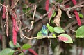 IMG 2023 - Jeweled Humming Bird