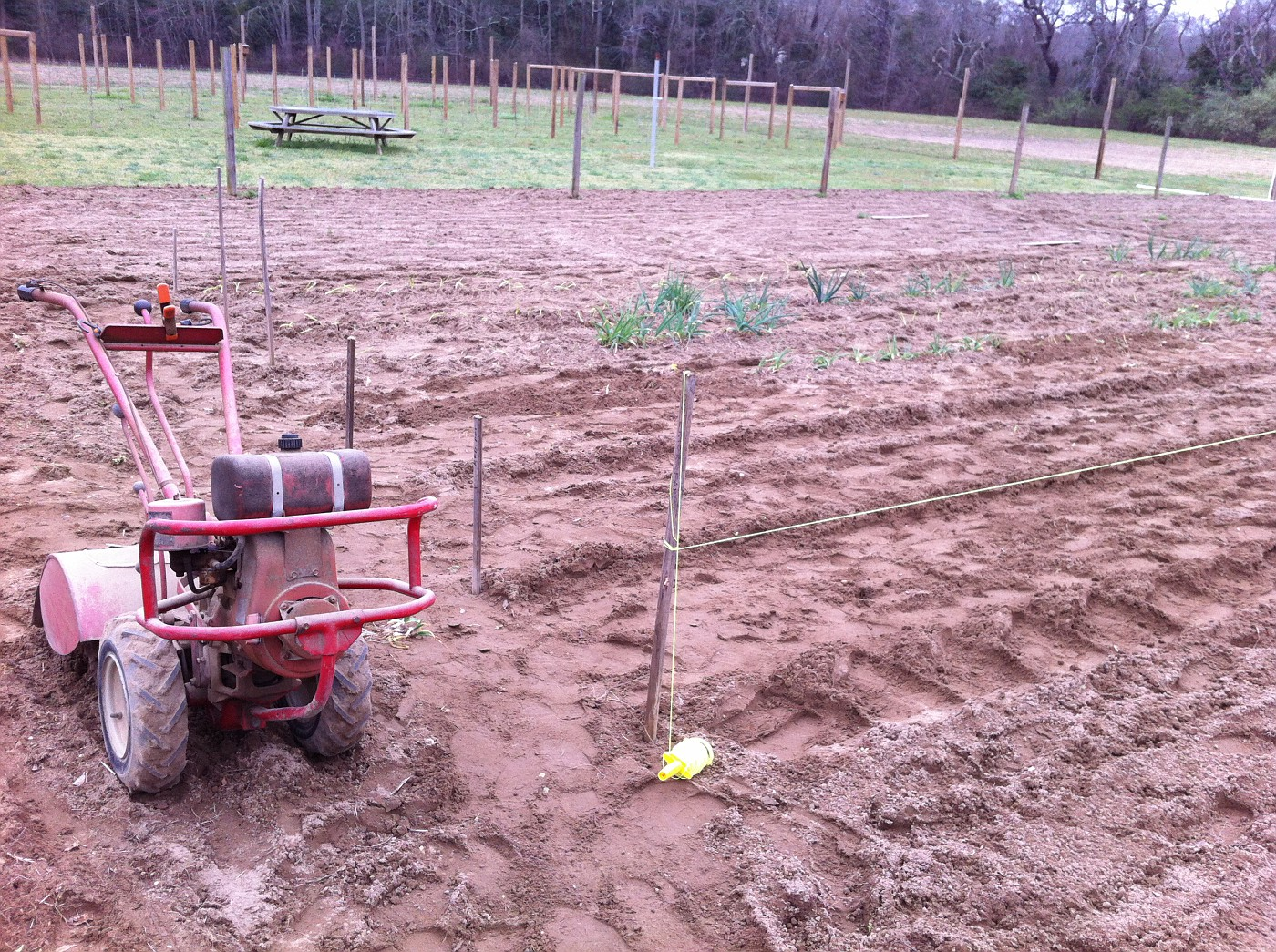 """Planting and Spacing of potatoes. I just use a heavy tamper for a hole maker.  About 18"""" apart.  String line for a straight row.  Push down / cover / mound over a bit..."""