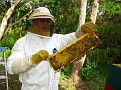 The Process of Extracting Honey / Checking the frames.