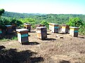 Honey Bee Hives in Mexico   Thank you Octavio Jimenez and your brother Isaac Jimenez in Mexico who tends to the bees  (2)