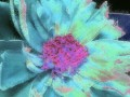 Flower Service 062d