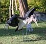 stork15.jpg