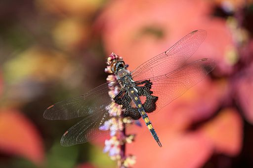 Black Saddlebags 2016 #3