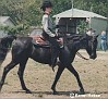 BA FAANCE FACE #395349 (Aza Faabo x Zera Bint Zallah, by Arabrook Al Boom) 1987 black mare bred by George Collins